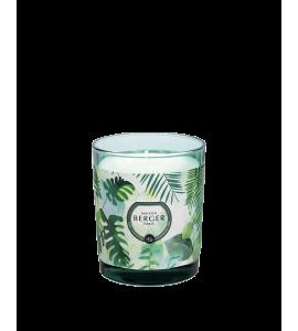 Bougie Parfumée Immersion Fraîcheur Eucalyptus 240G